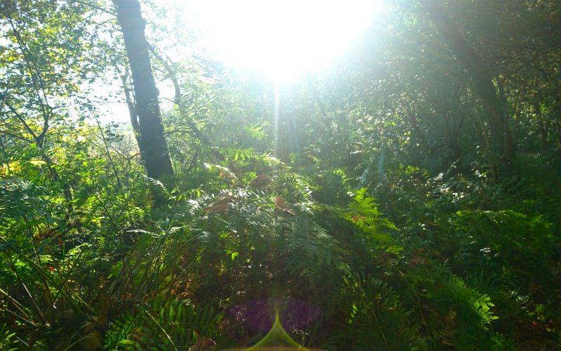Le soleil qui surgit de la forêt.